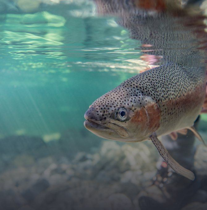 Fly Fishing Lodge in New Zealand: Top Rivers & Guides