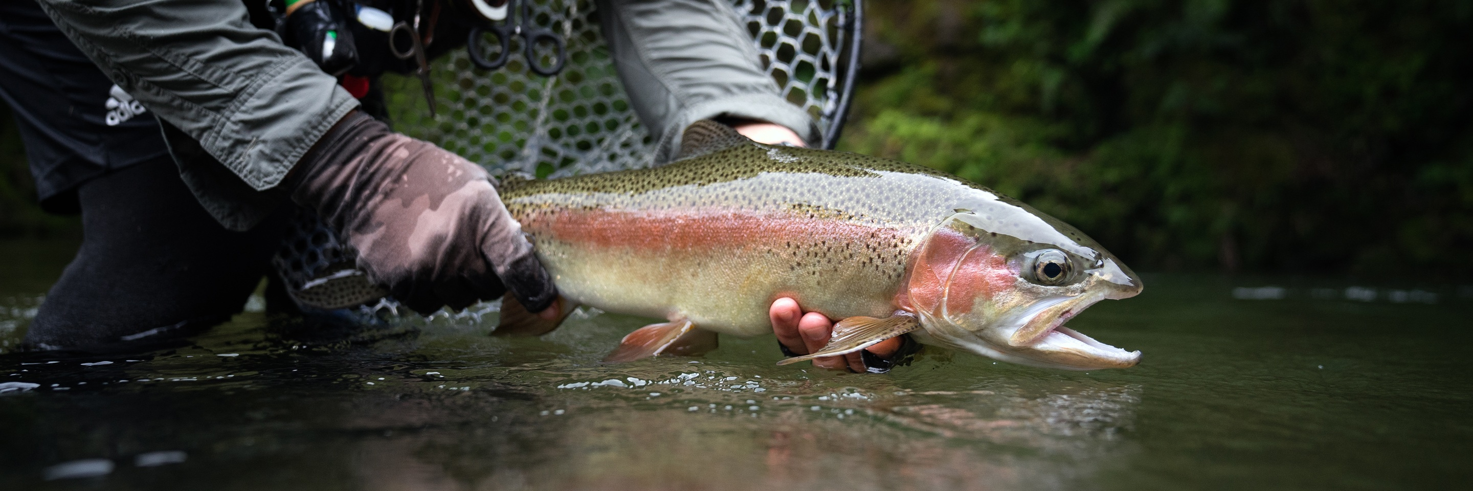 Catch and Release - Best Practice | Poronui